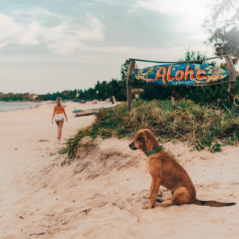 sri lanka beaches arugam bay dog