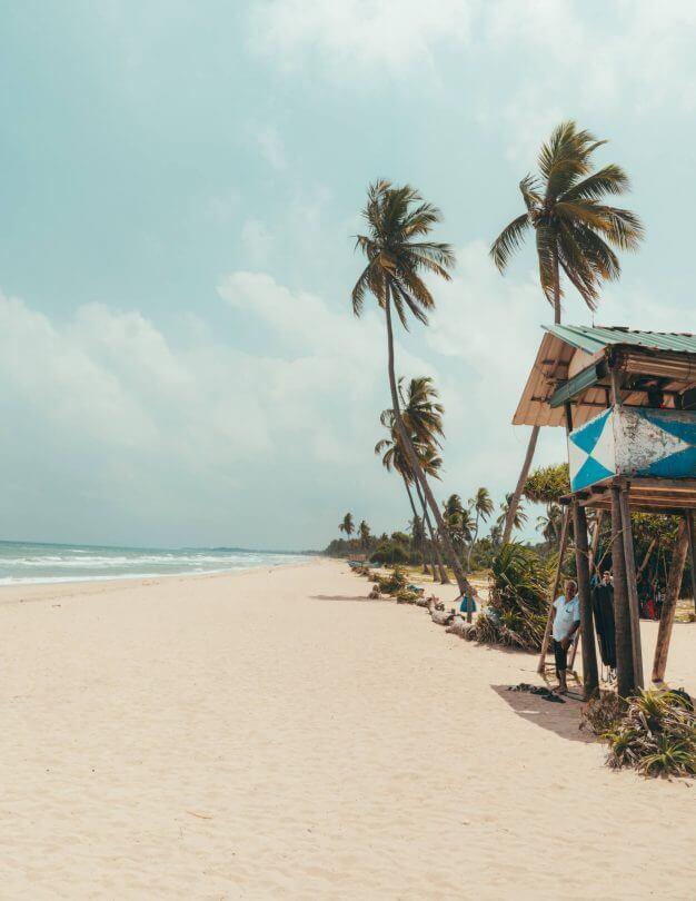 things do to trincomalee sri lanka nilaveli beach palm