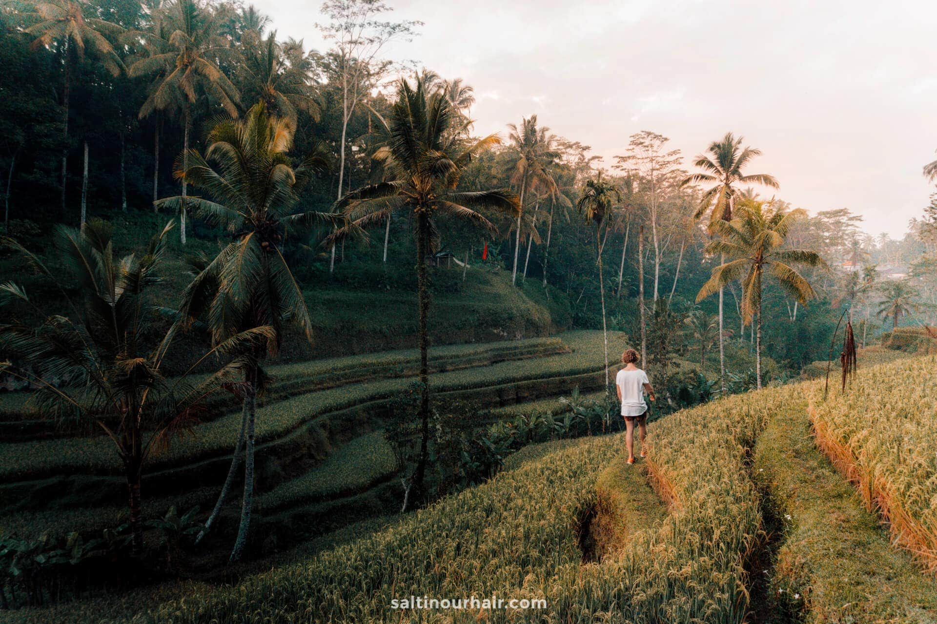 tegalalang rice terraces ubud