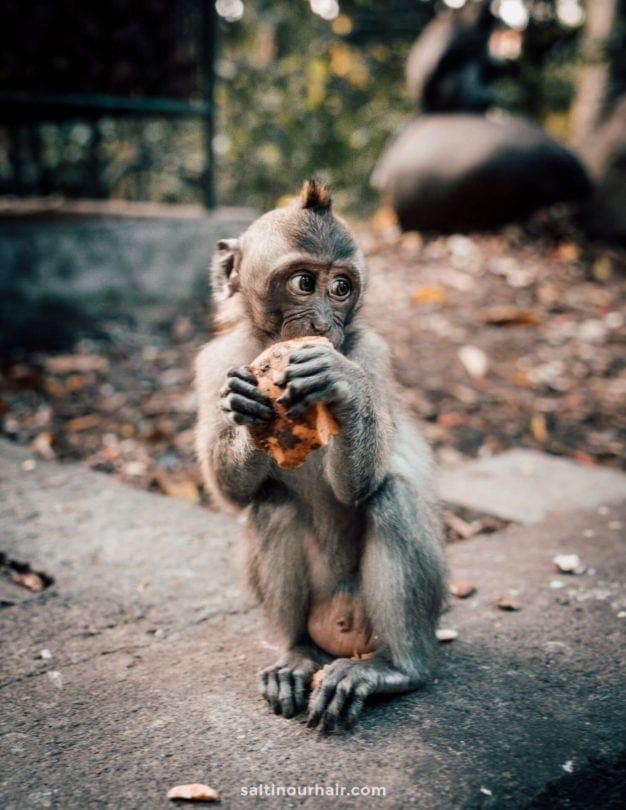 Monkey forest baby