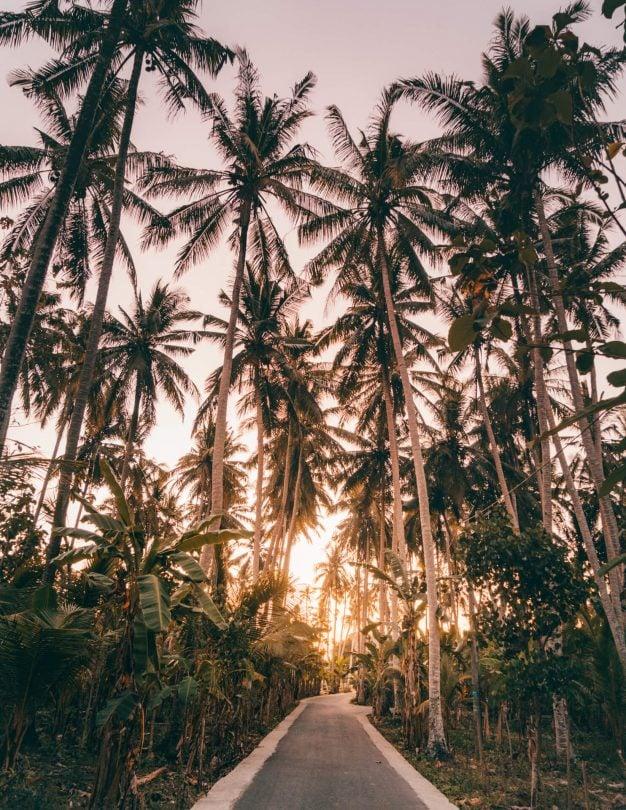 nusa penida trip guide crystal bay palmtrees