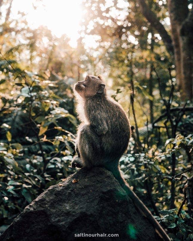 things must do ubud Monkey forest