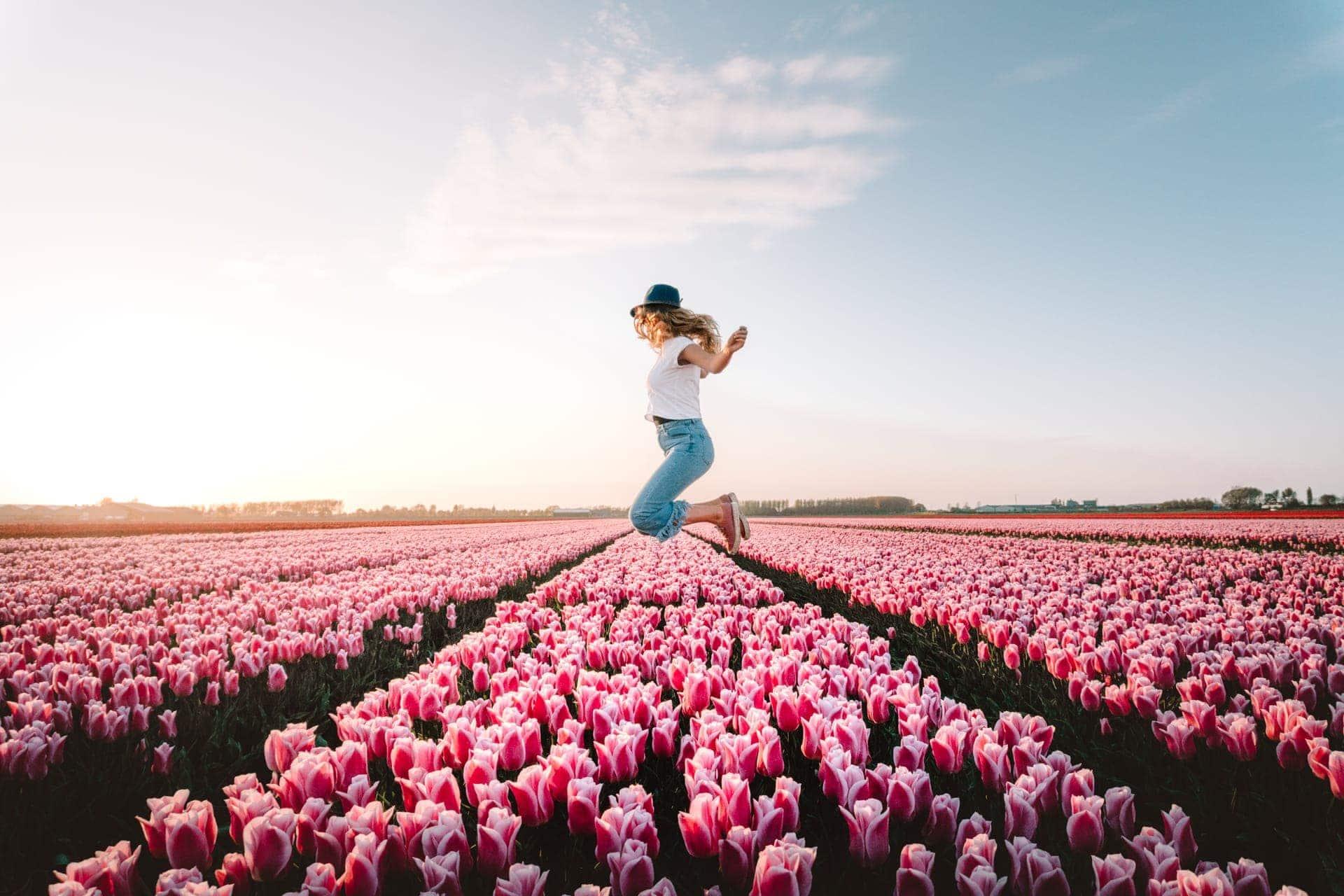 tulpen nederland springen