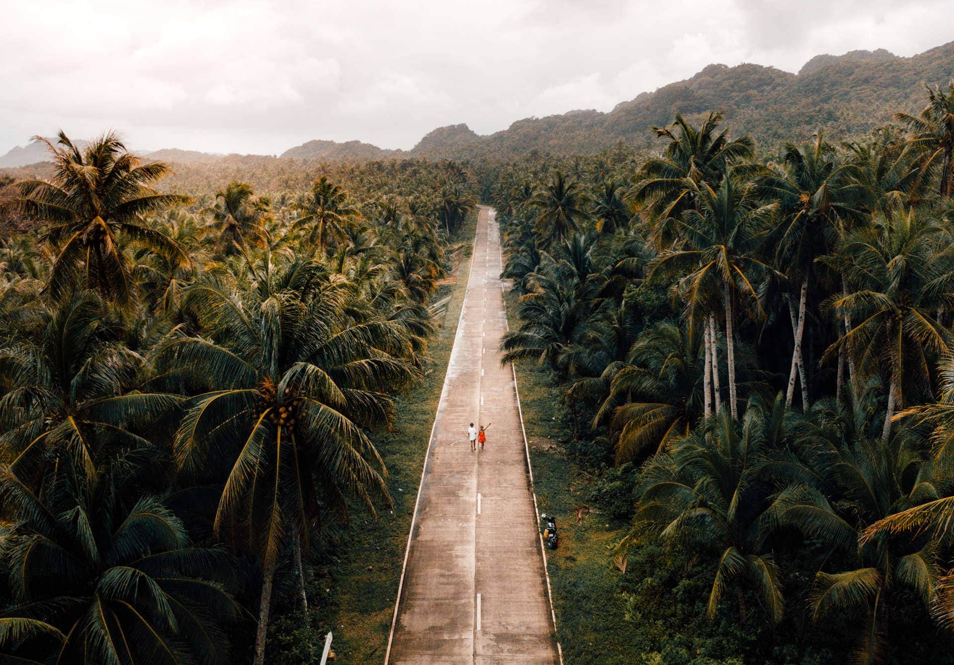 siargao philippines palm road