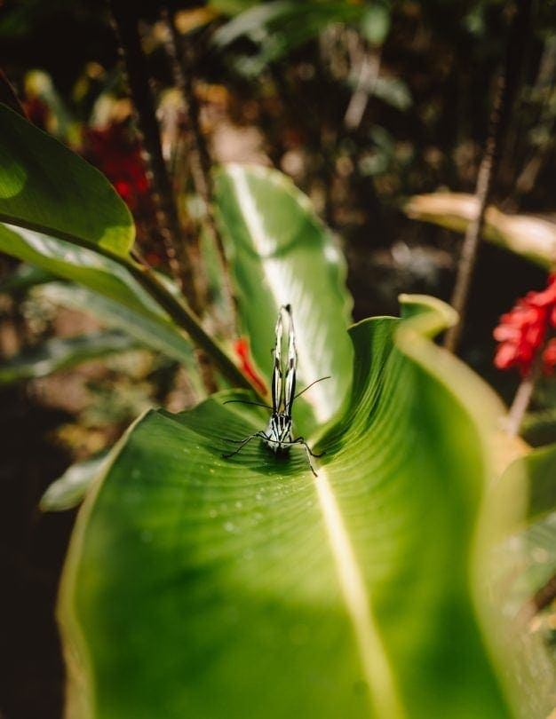 things to do siquijor butterfly sanctuary