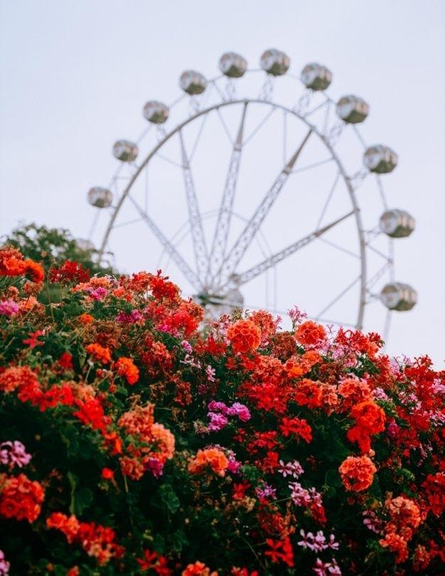 valencia spain flowers