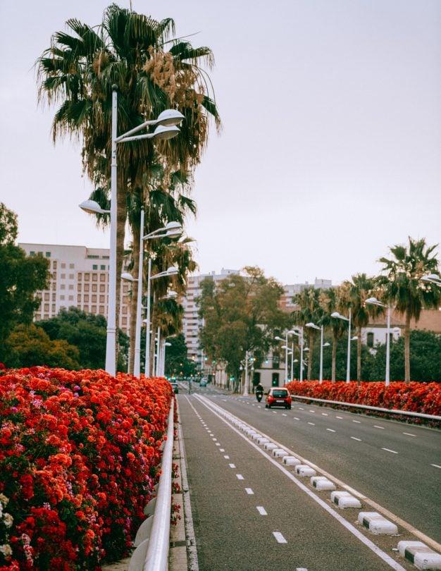 valencia flower bridge