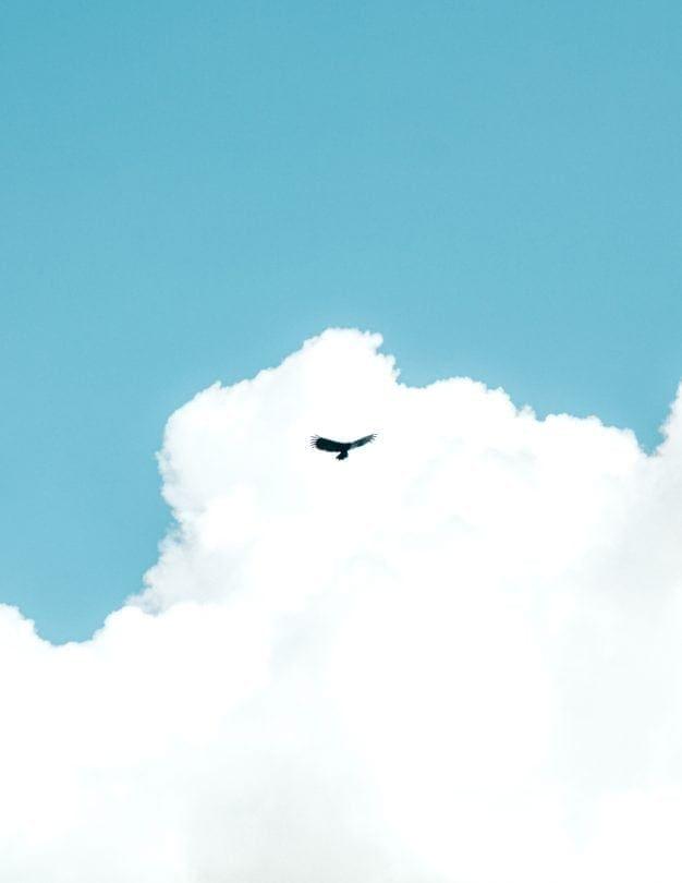 peru amazon birdwatching