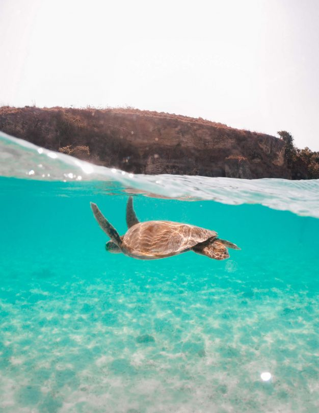 clean ocean reduce plastic