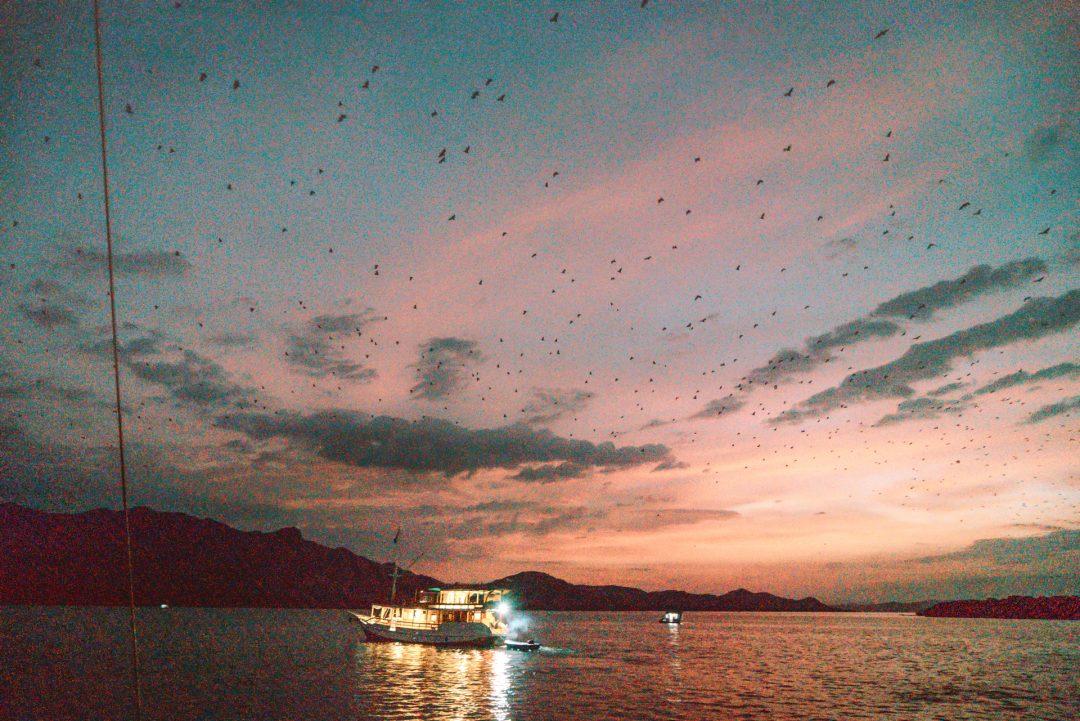 kalong island bat komodo