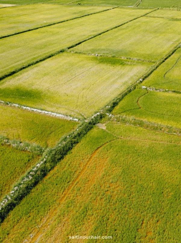 rice paddies langkawi