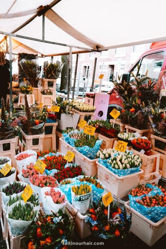 amsterdam tulips noordermarkt