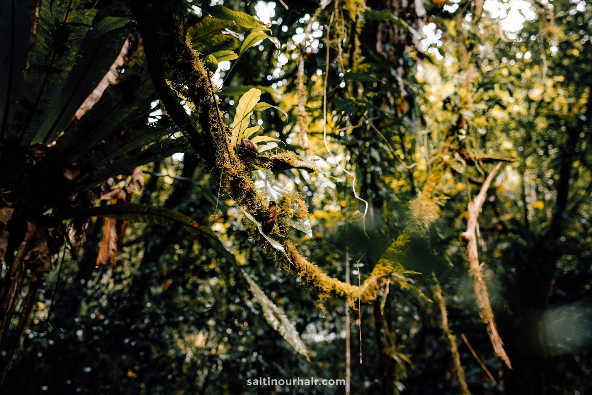 cameron highlands Jungle Trail