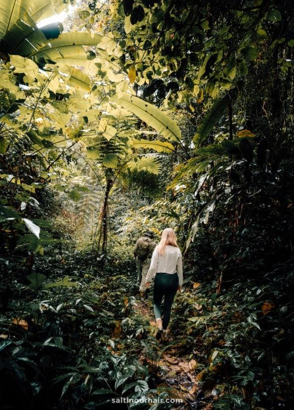 Jungle Trail malaysia