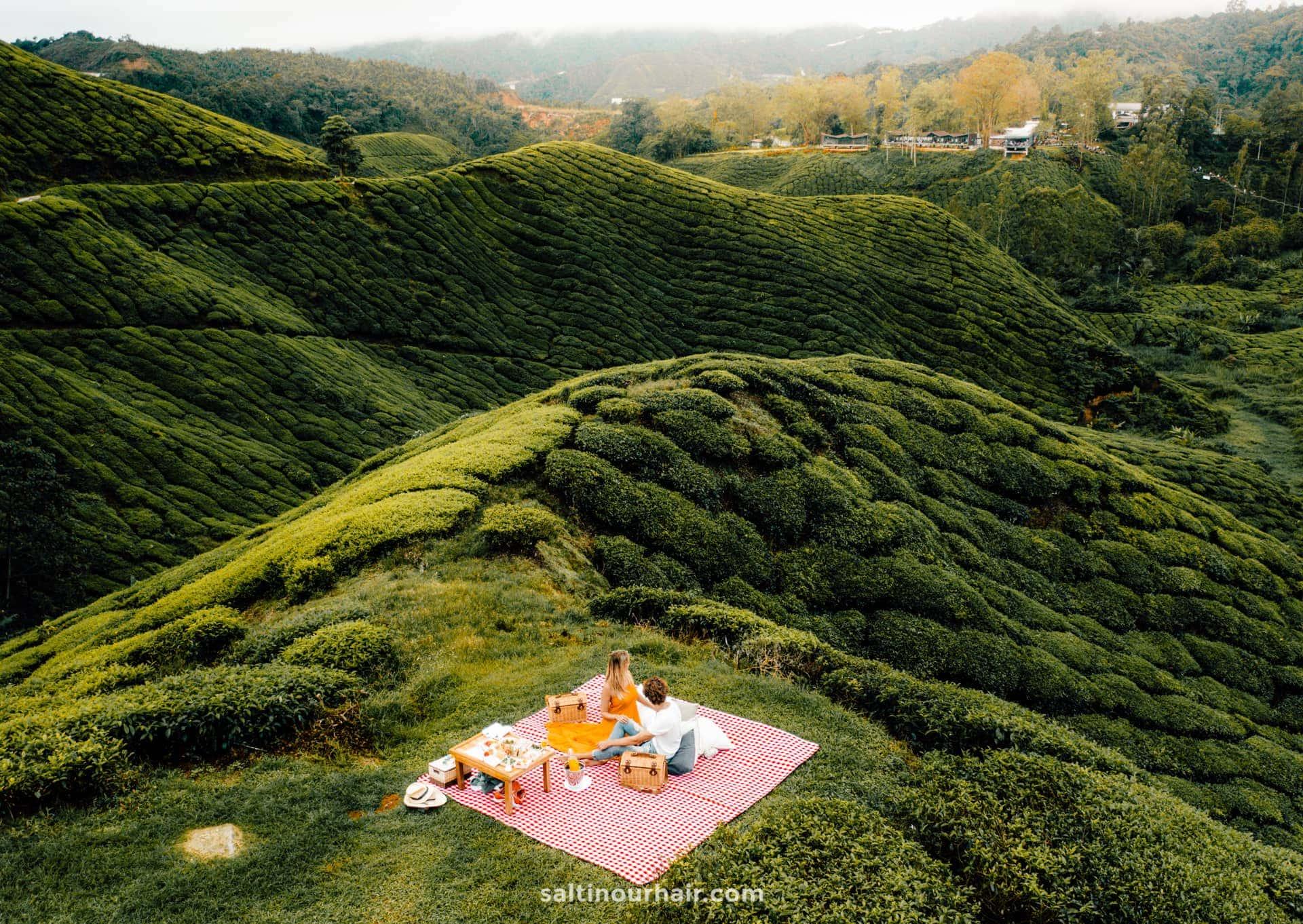 cameron highlands resort tea plantations picnic