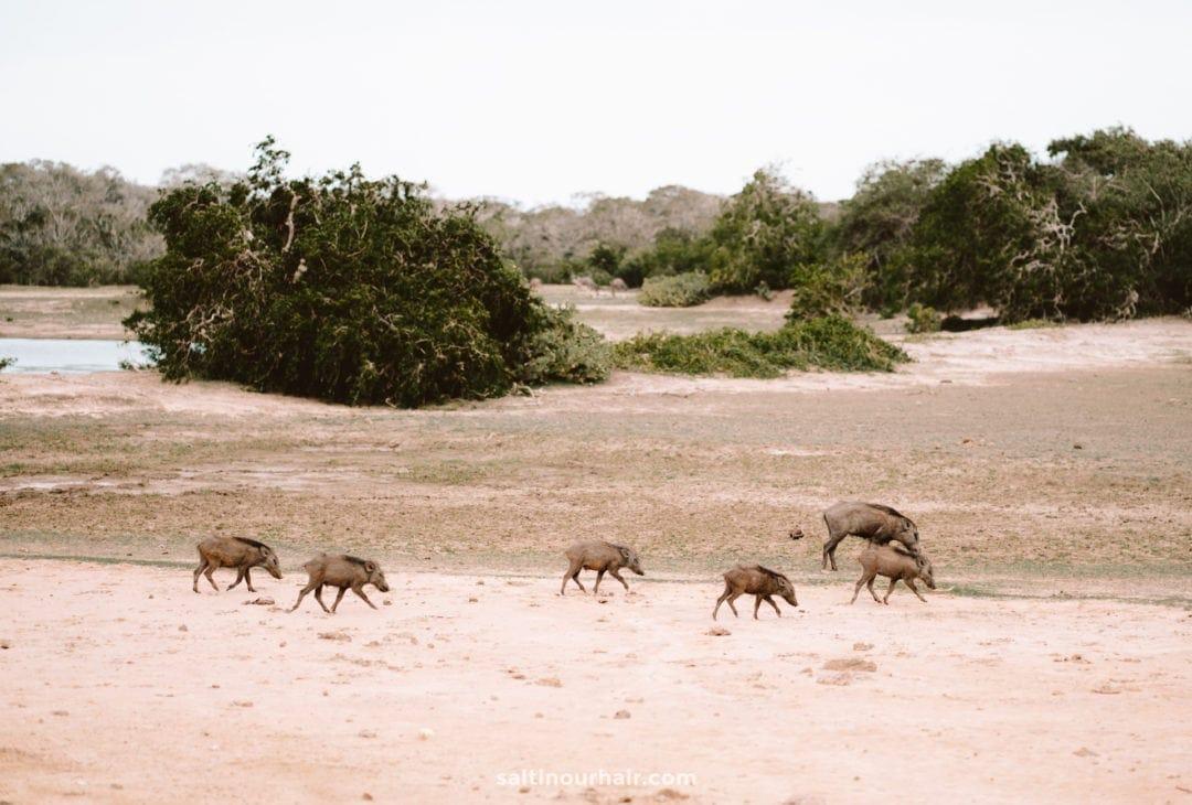 national park safari sri lanka