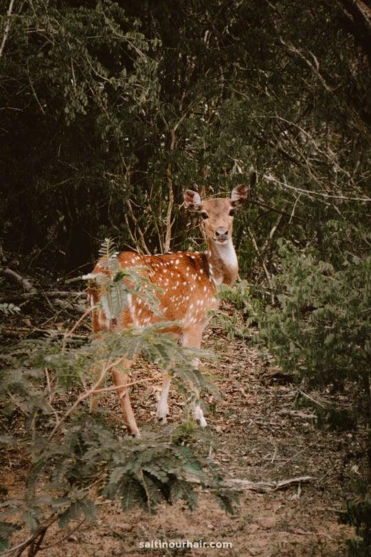 yala national park sri lanka wildlife