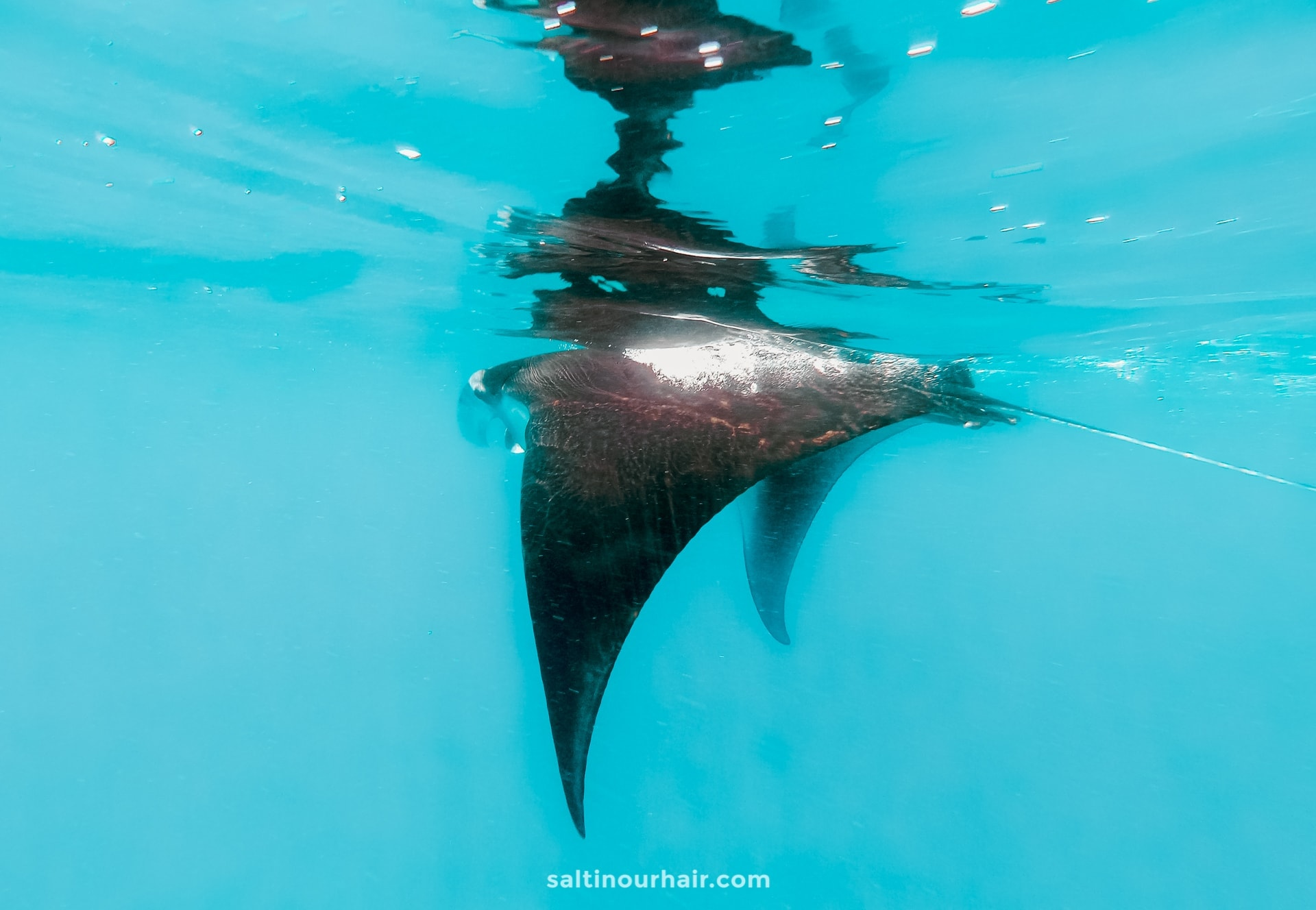 indonesia swim manta rays