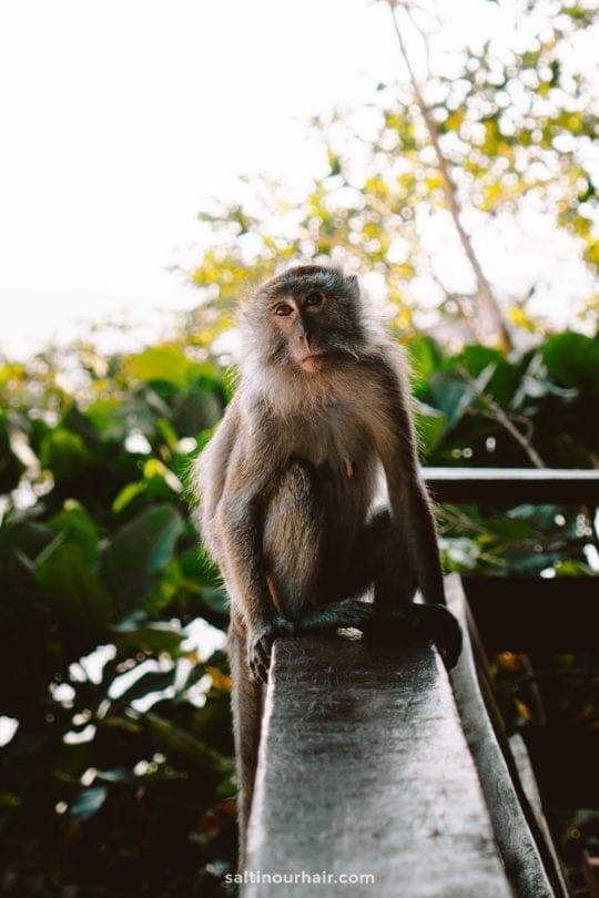 Penang National Park malaysia monkey