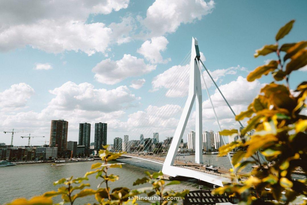 erasmus bridge rotterdam city trip day trips from amsterdam
