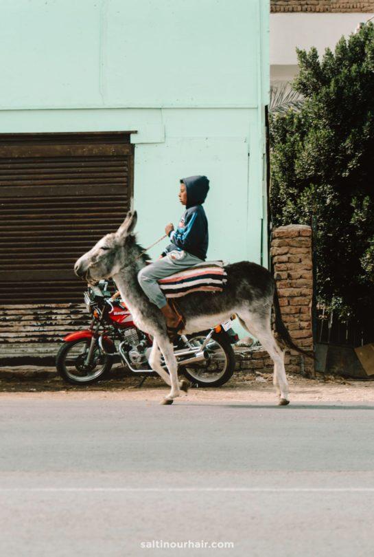 egypt donkey