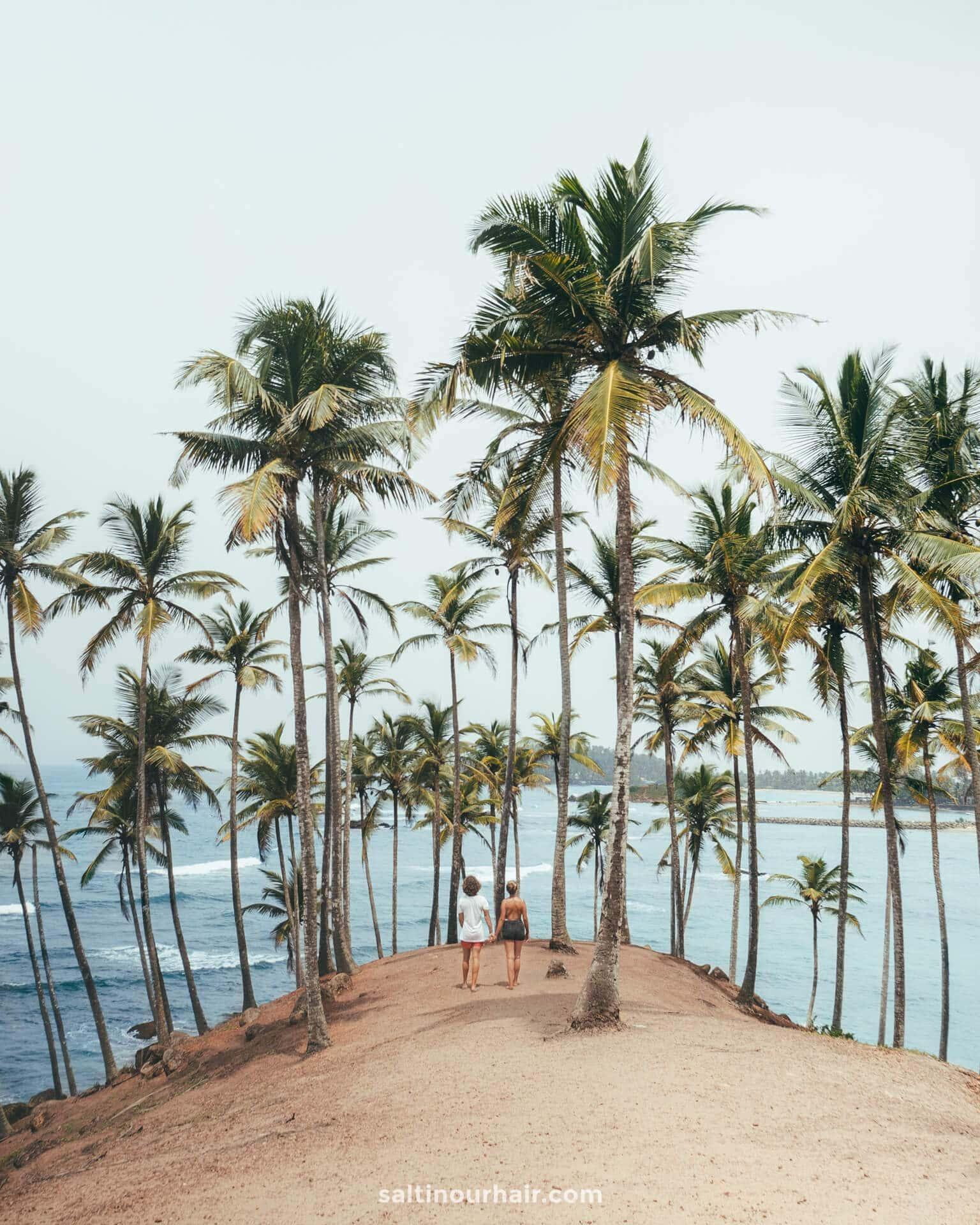 Things To Do mirissa Sri Lanka coconut tree spot