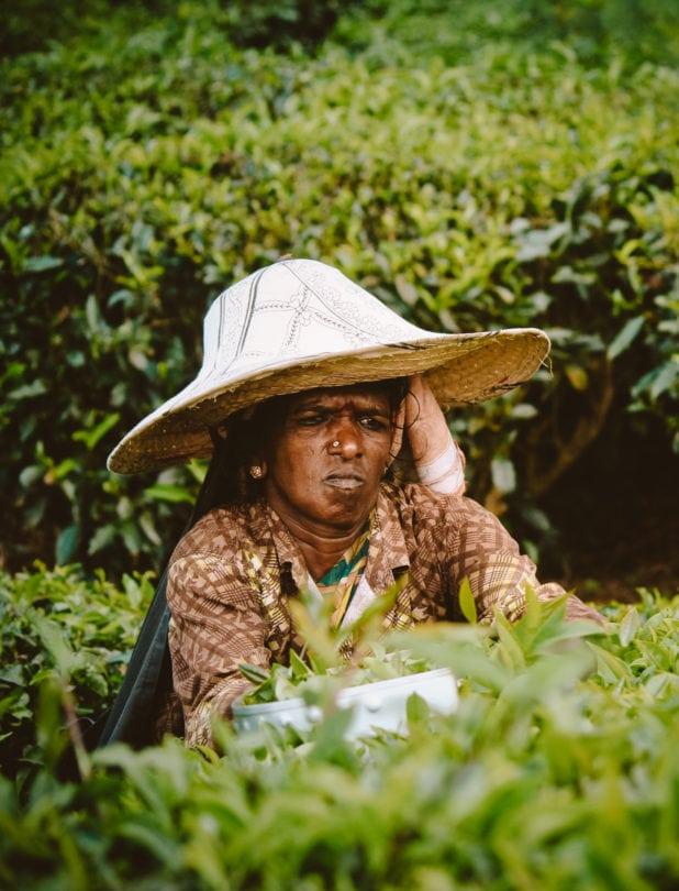 tea plantation kerala india