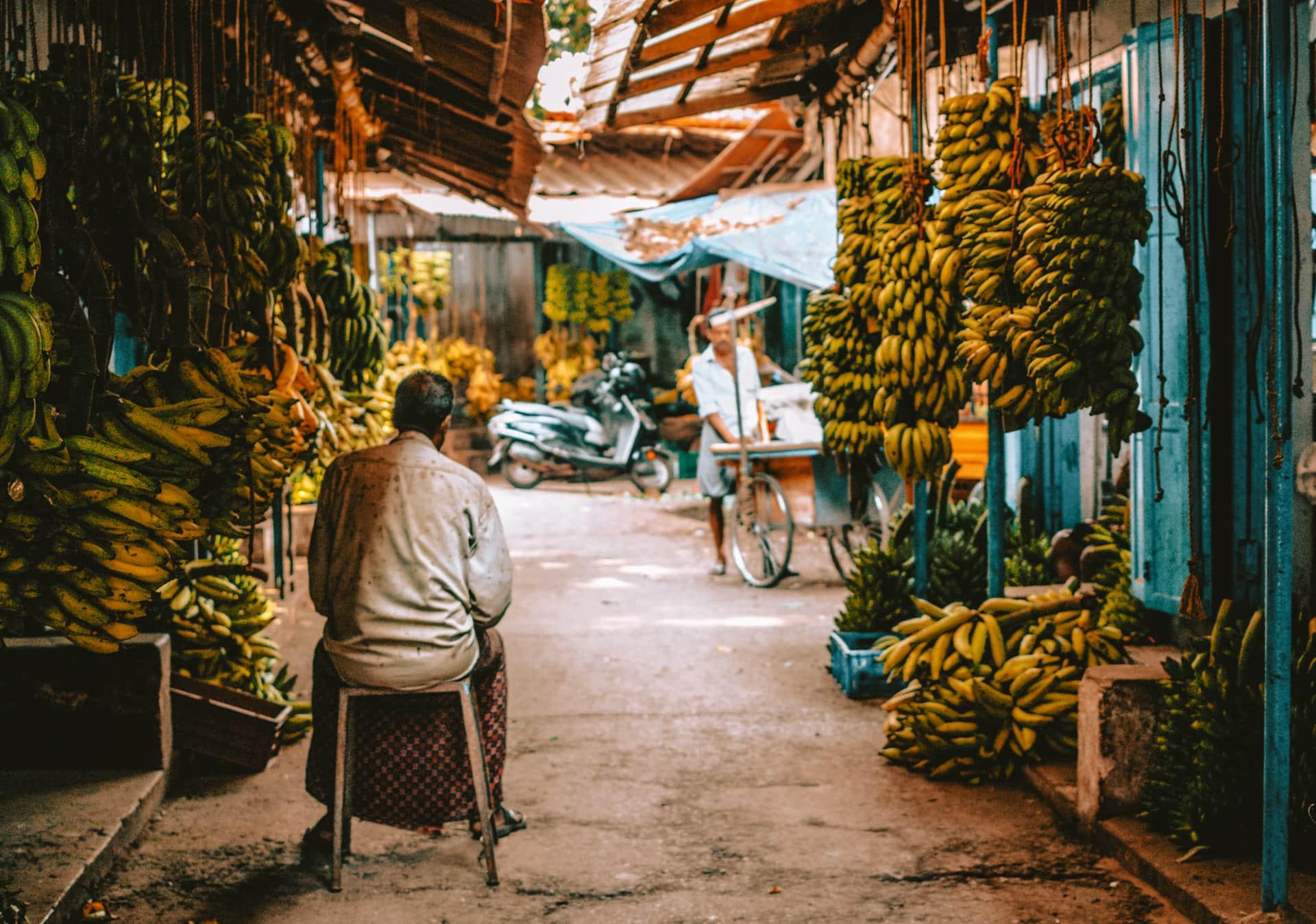 karela india market