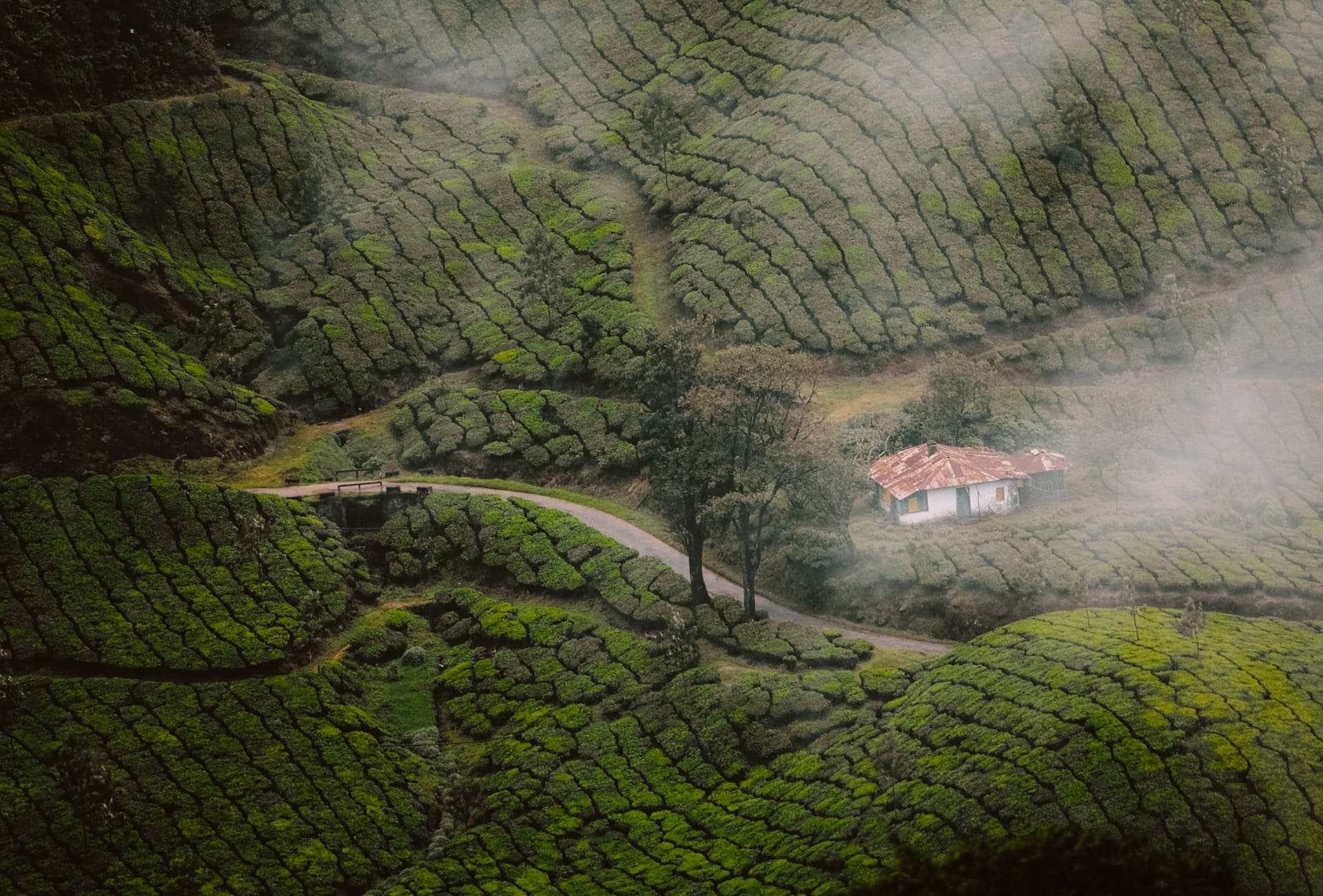 kerala india tea plantation
