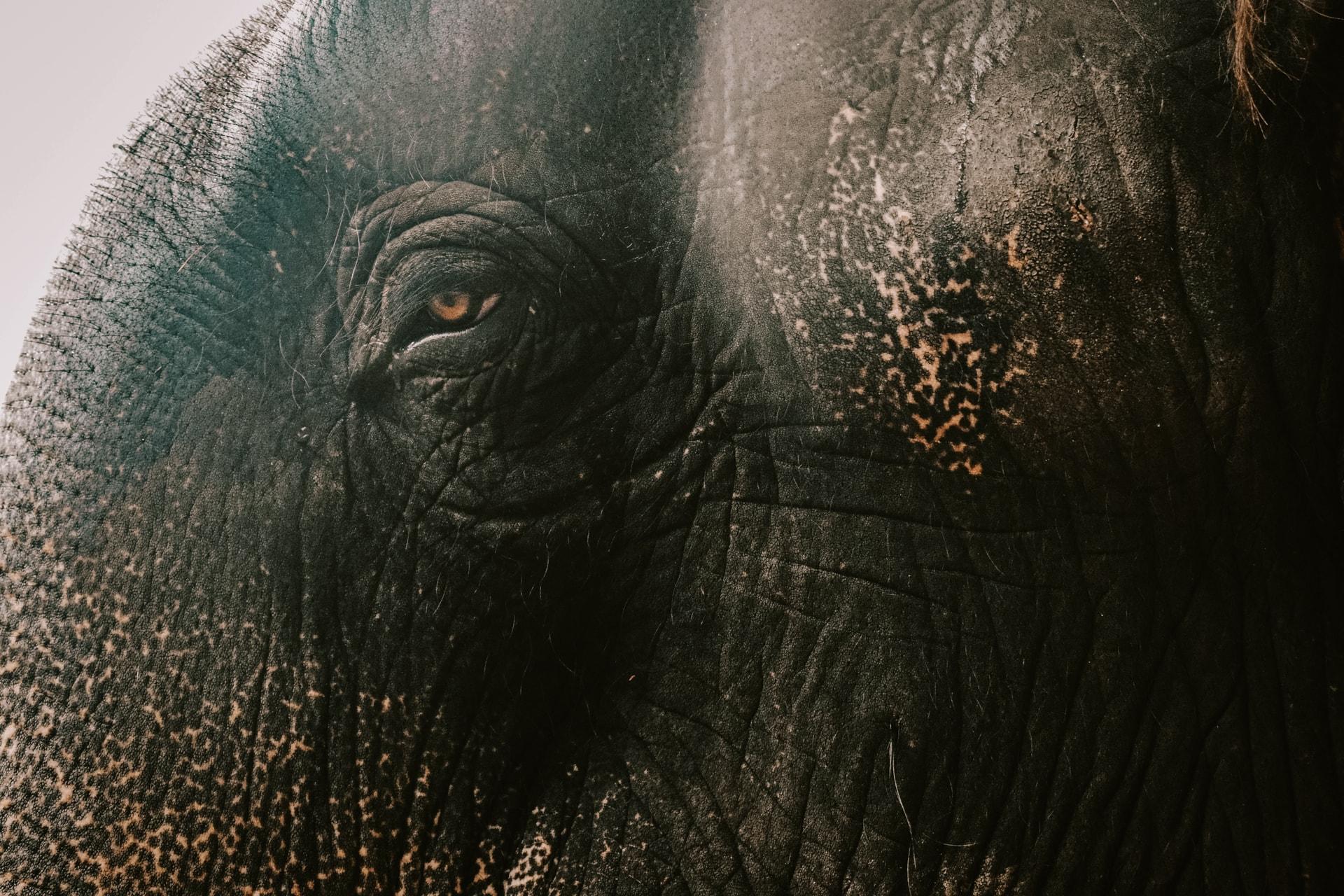 kerala india elephant