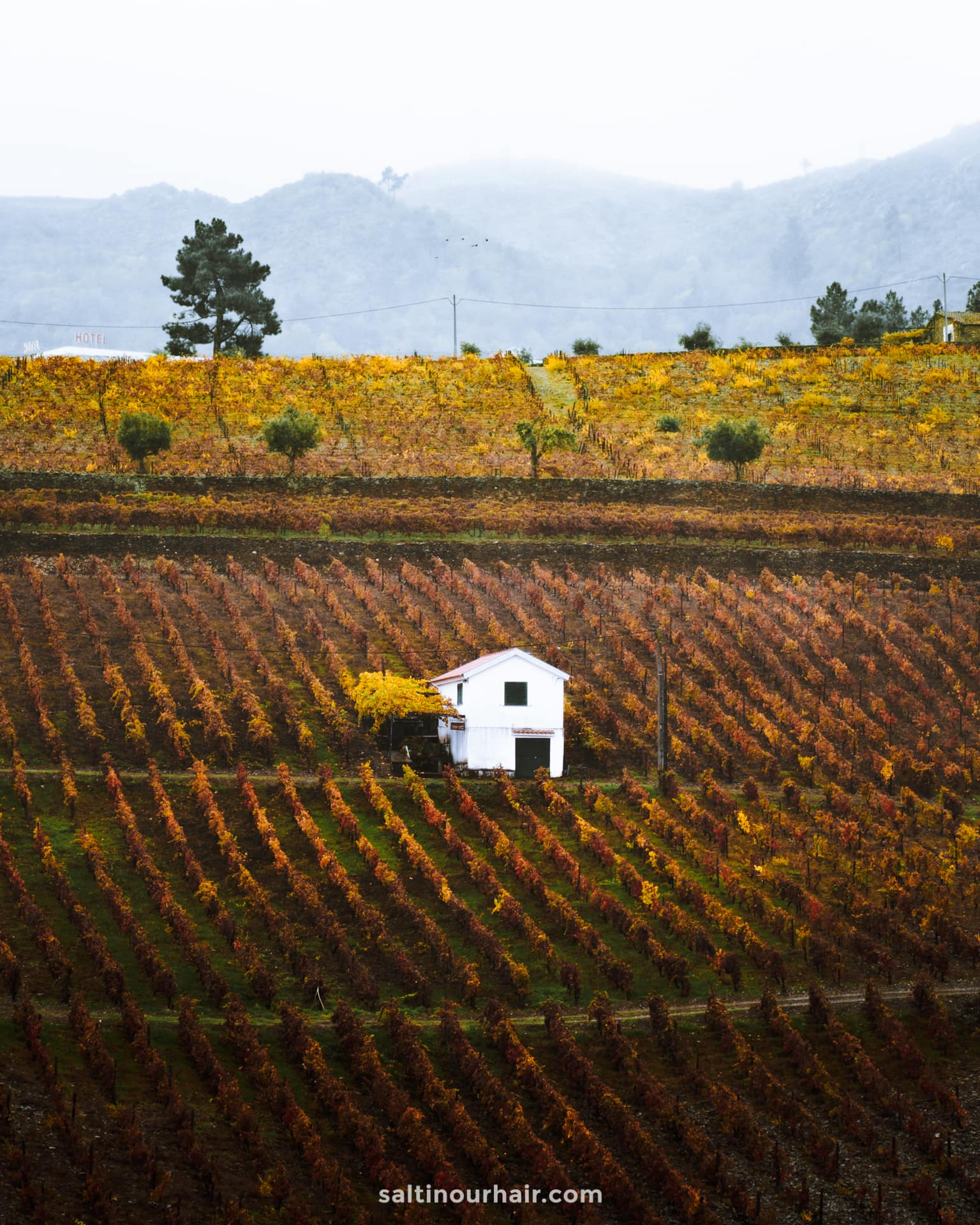 douro valley portugal wineries