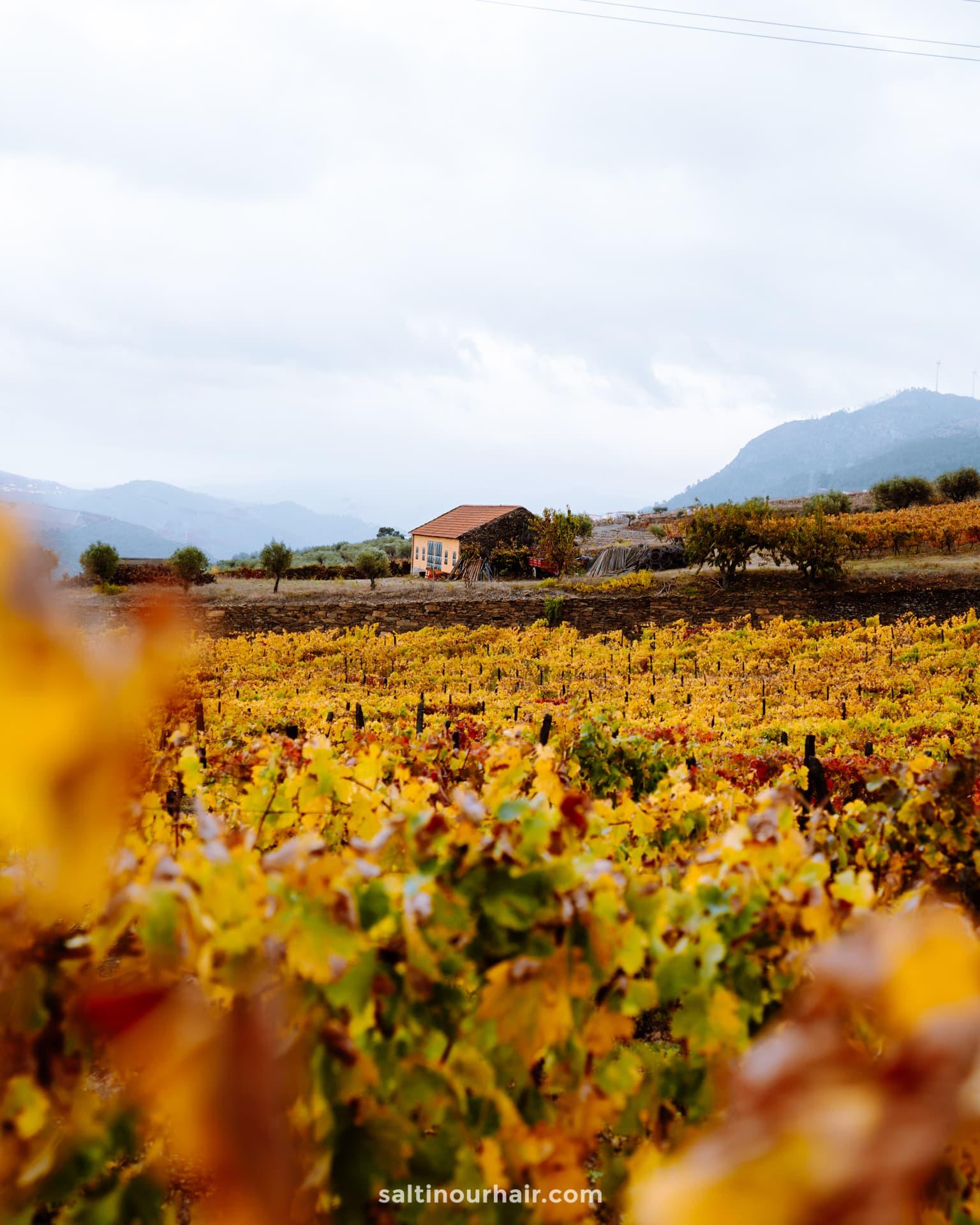 douro valley portugal wine tour