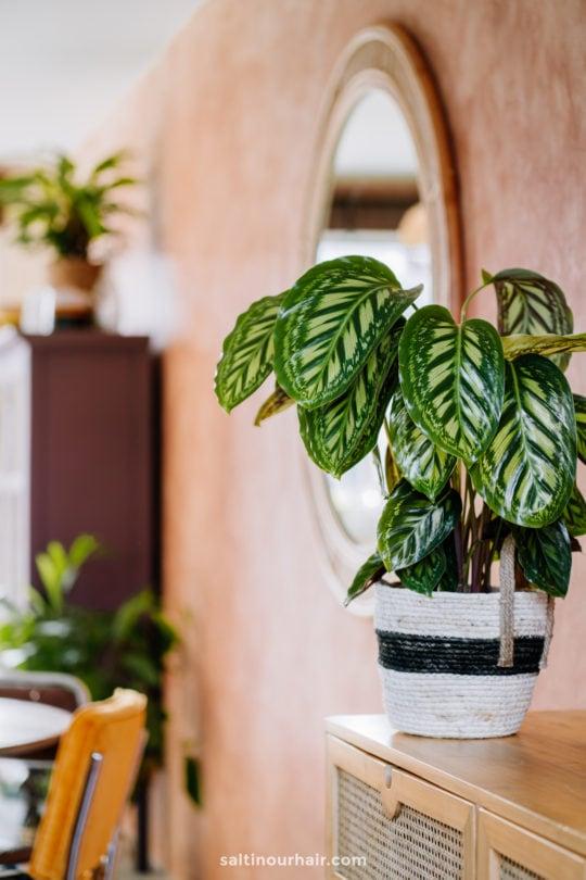 Travel Home Decor ideas plants