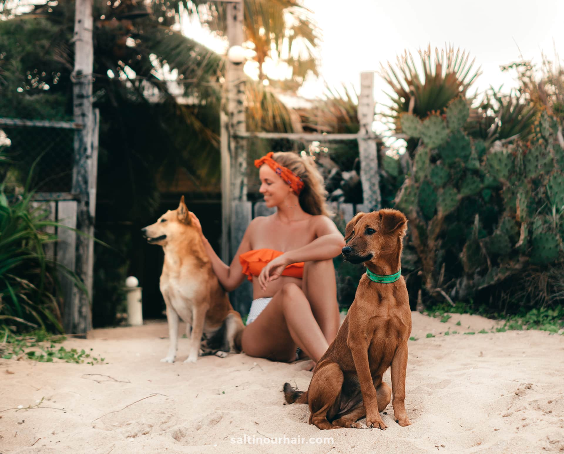dogs beach asia